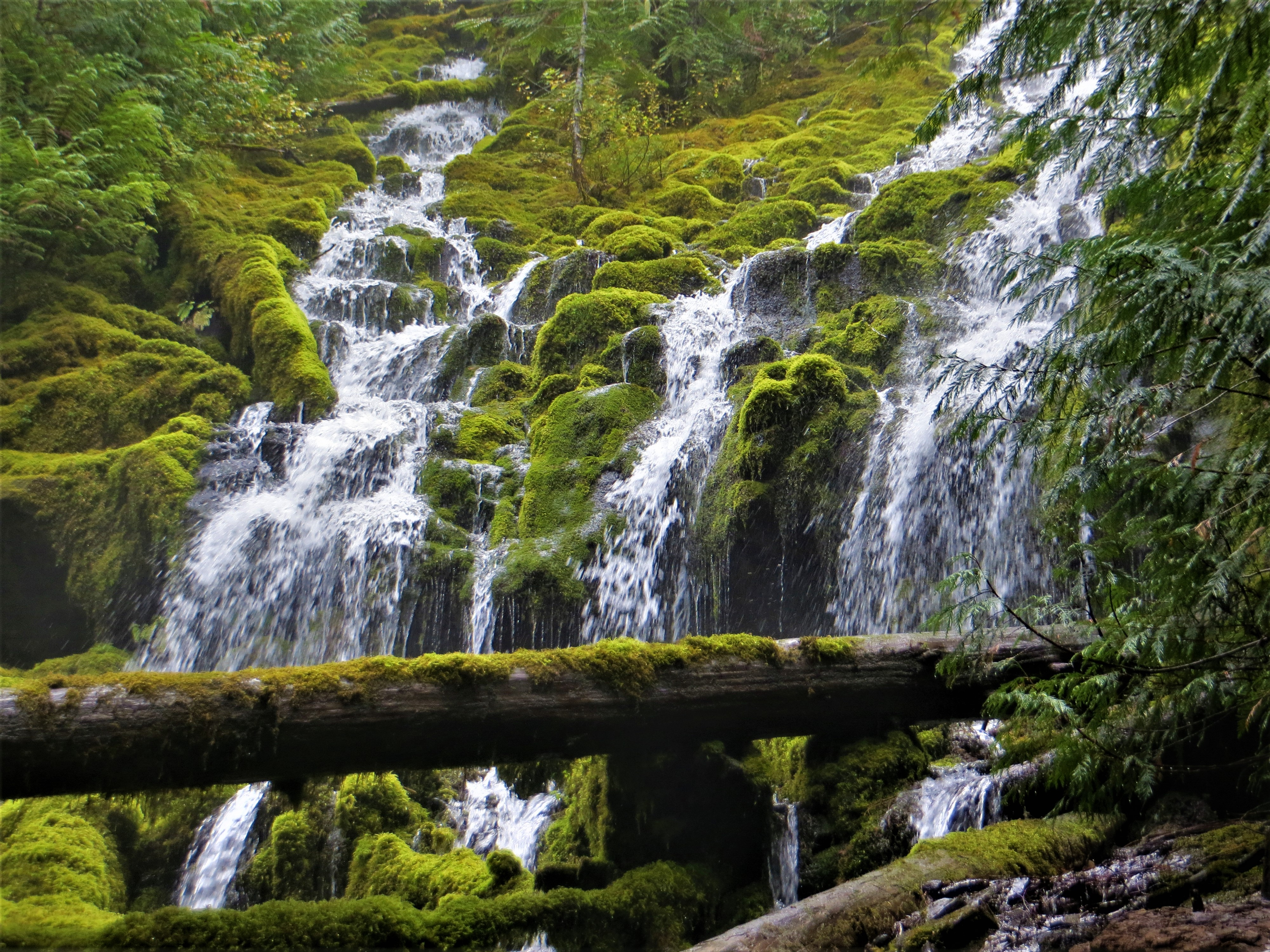 Proxy Falls, McKenzie Pass, OR